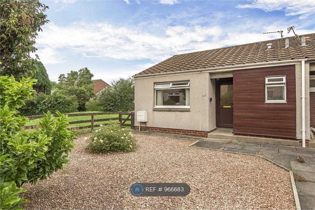 1 bed bungalow to rent in Fraser Avenue, St. Andrews KY16