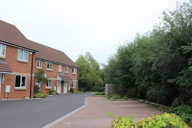 Thumbnail Semi-detached house to rent in Poplar Road, Taunton, Somerset