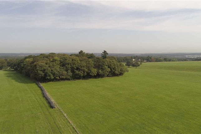 Thumbnail Land for sale in Haslemere Road, Brook, Surrey