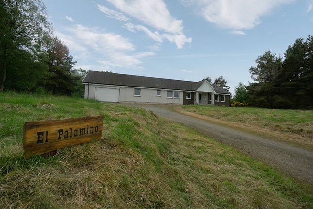 Thumbnail Bungalow for sale in Ladystone, Bunchrew, Inverness