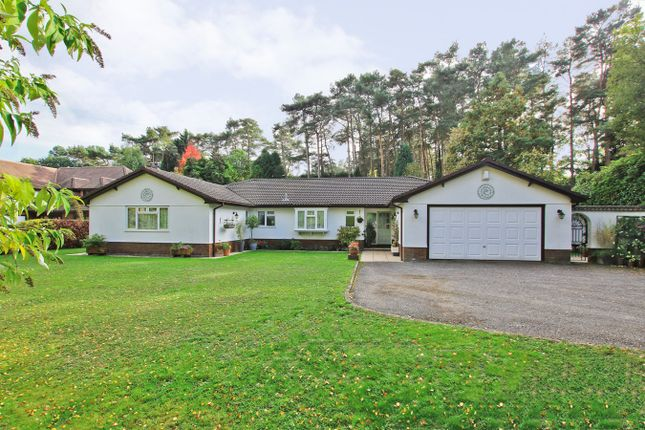 Thumbnail Bungalow for sale in The Chase, Ashley, Ringwood