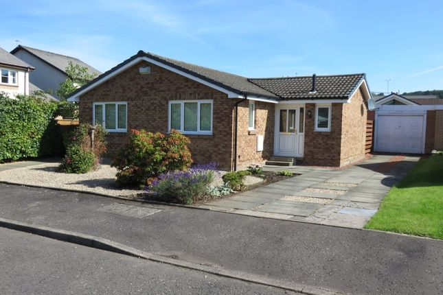 Thumbnail Bungalow to rent in Dark Brig Road, Crossford, Carluke