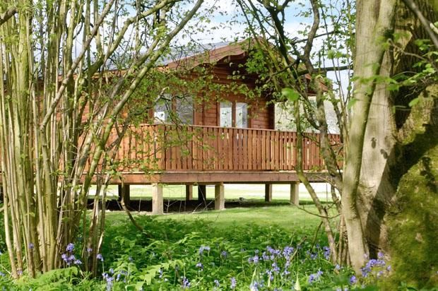 Thumbnail Bungalow to rent in Pitt, Winchester, Hampshire