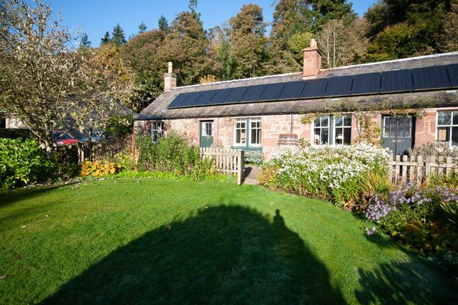 1 bed semi-detached house to rent in Littleton Of Airlie, Kirriemuir, Angus DD8