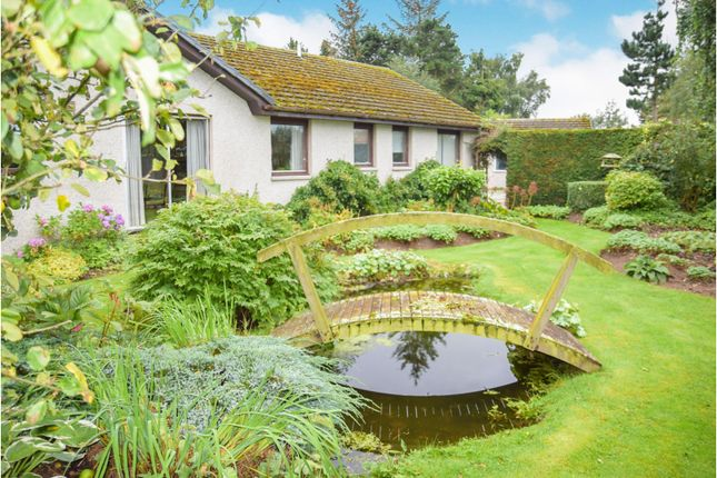 Thumbnail Detached bungalow for sale in Little Kindrummie Cawdor Road, Nairn