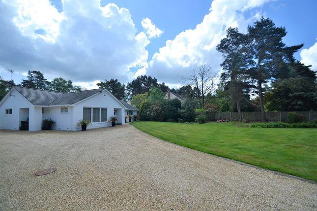 Thumbnail Detached bungalow for sale in Avon Castle, Ringwood, Hampshire