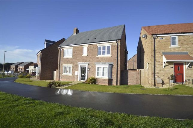 Thumbnail Detached house to rent in Howgate Drive, Eastfield, Scarborough