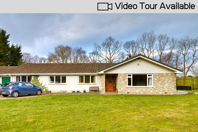 Thumbnail Bungalow for sale in Doune Road, Dunblane