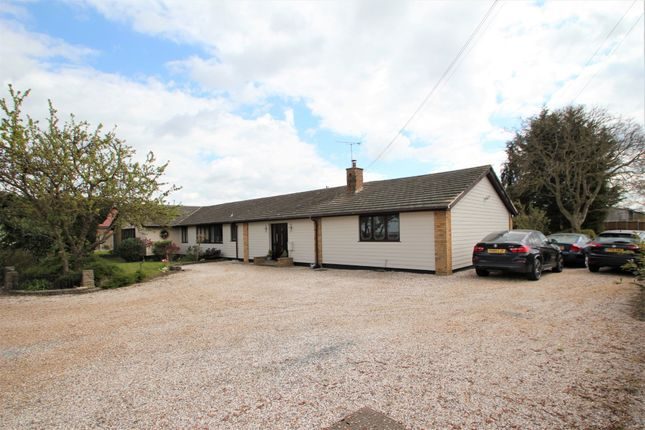 Thumbnail Detached bungalow for sale in Burnham Road, Latchingdon, Chelmsford