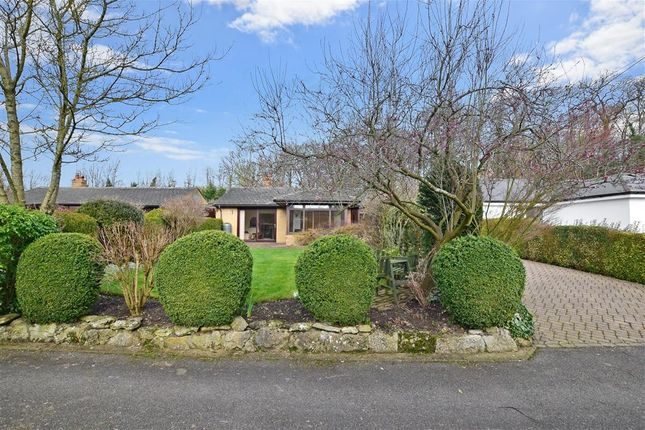 Thumbnail Bungalow for sale in The Quarries, Boughton Monchelsea, Maidstone, Kent