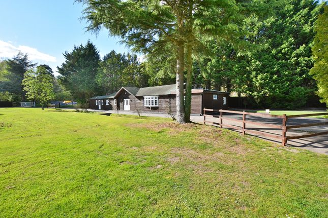Thumbnail Detached bungalow for sale in Gole Road, Pirbright, Woking