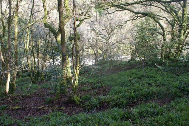 Woodland of Pentrecwrt, Llandysul, 5Bd SA44