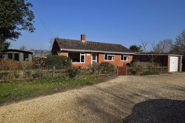 Thumbnail Detached bungalow to rent in Sway Road, Tiptoe, Lymington