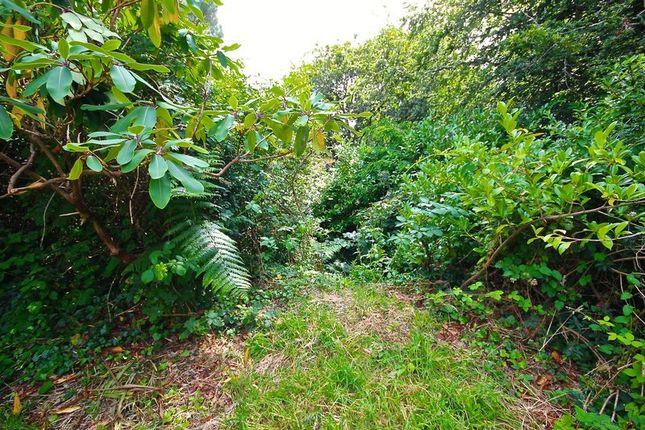 Overgrown Garden End