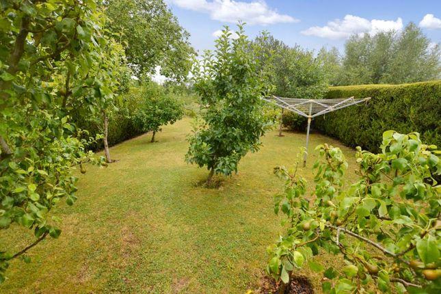Orchard Area of Rewe Court, Rewe, Exeter, Devon EX5