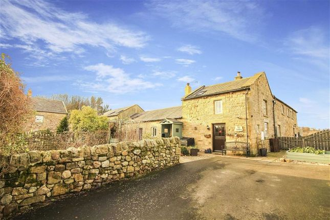 Thumbnail Barn conversion for sale in North Farm, Warenford, Northumberland