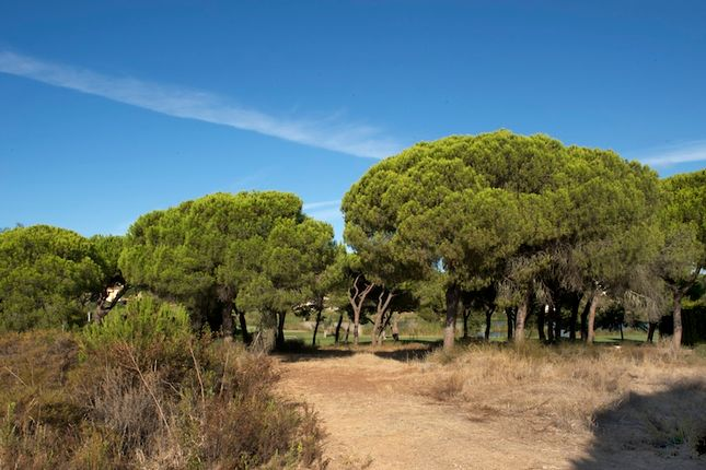 Thumbnail Land for sale in Loulé, Portugal