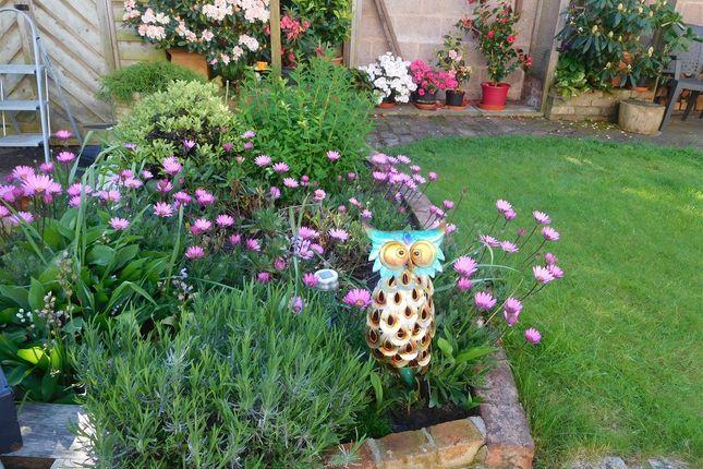 Garden of White Street, Topsham, Exeter EX3