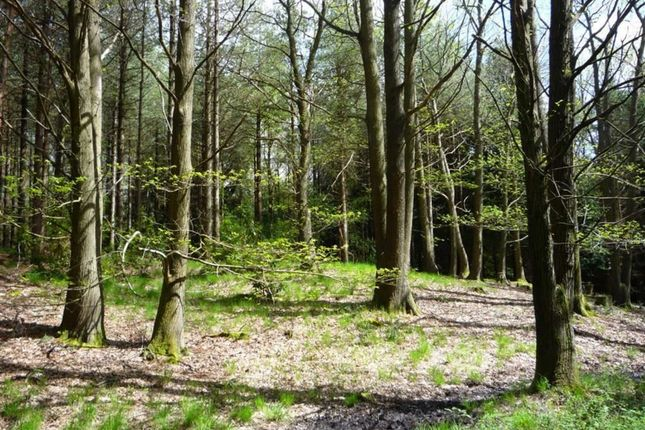 Thumbnail Land for sale in Rushall Lane, Wimborne, Dorset
