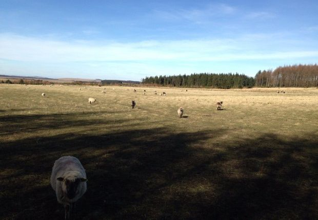 Commercial property for sale in Cuminestown, Turriff, Aberdeenshire