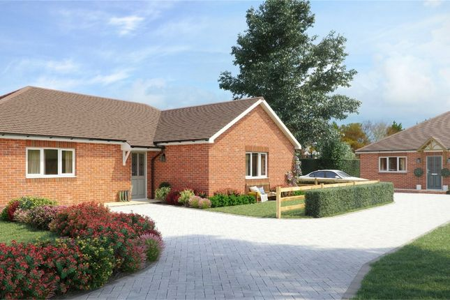 Thumbnail Detached bungalow for sale in Rafati Way, Bexhill On Sea, East Sussex