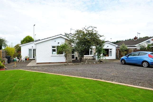 Thumbnail Bungalow for sale in Eglantine Road, Lisburn