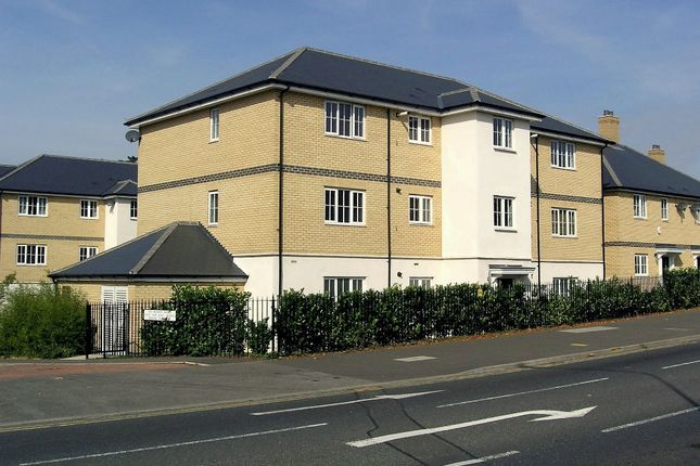 Thumbnail Property for sale in Ipswich Road, Colchester