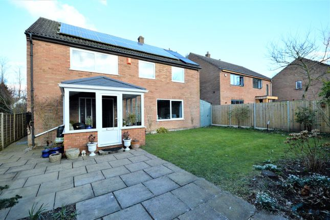 Thumbnail Detached house for sale in Beechbank, Norwich