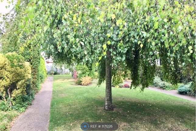 Thumbnail Terraced house to rent in Birch Close, Cambridge