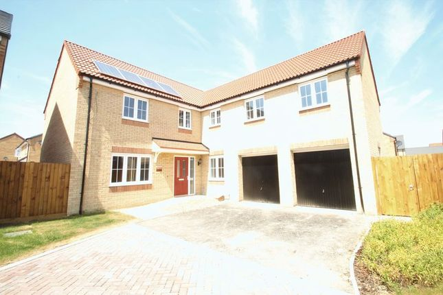 Thumbnail Detached house for sale in Woburn Drive, Thorney, Peterborough