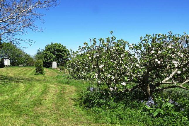Orchard/Field of Bryn Eithin Road, Afonwen, Mold CH7