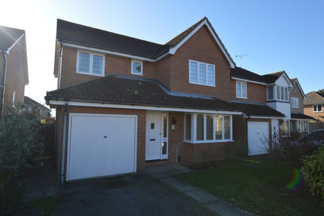 Thumbnail Detached house to rent in Wryneck Close, Colchester