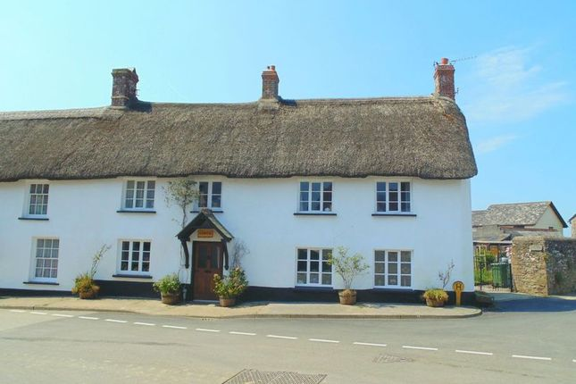 Thumbnail Property for sale in South Street, Sheepwash, Beaworthy