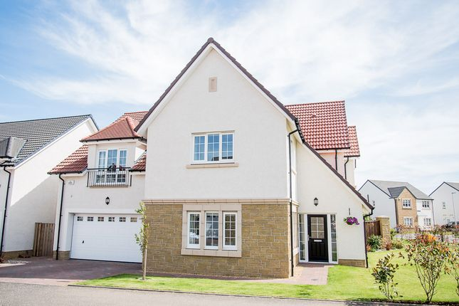Thumbnail Detached house for sale in Cranesbill Place, Larbert