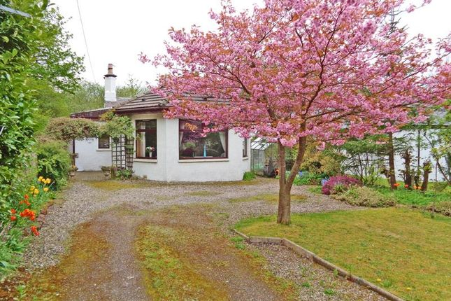 Thumbnail Cottage for sale in The Dale, Kilconquhar, Leven