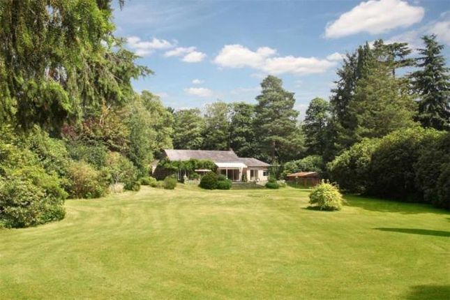 Thumbnail Detached house for sale in Wentworth Drive, Wentworth, Virginia Water
