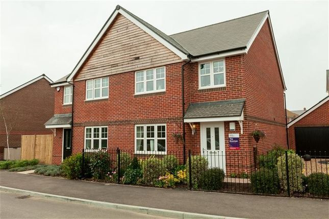 Thumbnail Property to rent in Primrose Place, Worthing