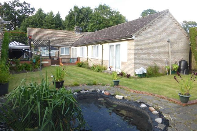 Thumbnail Detached bungalow for sale in Lynn Road, Watlington, King's Lynn