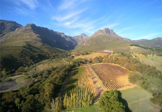 Thumbnail Country house for sale in Waterkloof Farm, Blaauwklippen Road, Stellenbosch, Western Cape, 7600