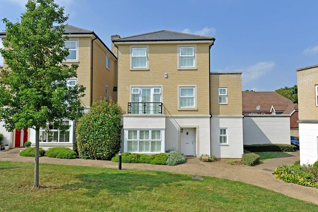 Thumbnail Detached house to rent in Knox Road, Guildford