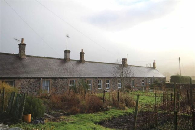 Thumbnail Terraced house to rent in West Newton, Kirknewton, Wooler