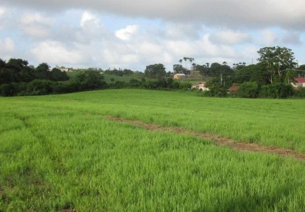 Land for sale in Auburn Plantation, St Joseph, Barbados