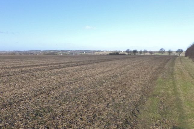 Thumbnail Land for sale in Horkesley Hill, Nayland, Colchester