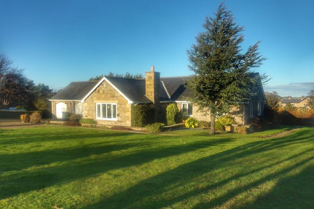 Thumbnail Bungalow for sale in Orchard Loaning, Rennington, Alnwick