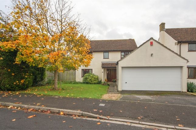 Thumbnail Detached house for sale in 29 St Medard Road, Wedmore, Somerset