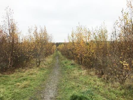 Thumbnail Land for sale in Land Off Ironville Grove, Codnor Park, Ironville, Nottingham, Nottinghamshire