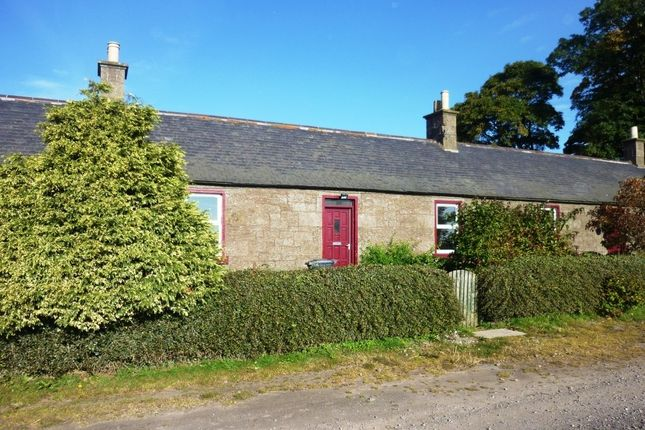 Thumbnail Terraced house to rent in Montrose