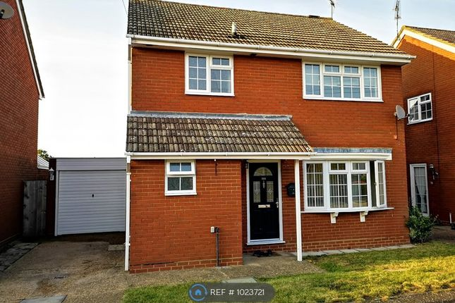 Thumbnail Detached house to rent in St Fabians Drive, Chelmsford