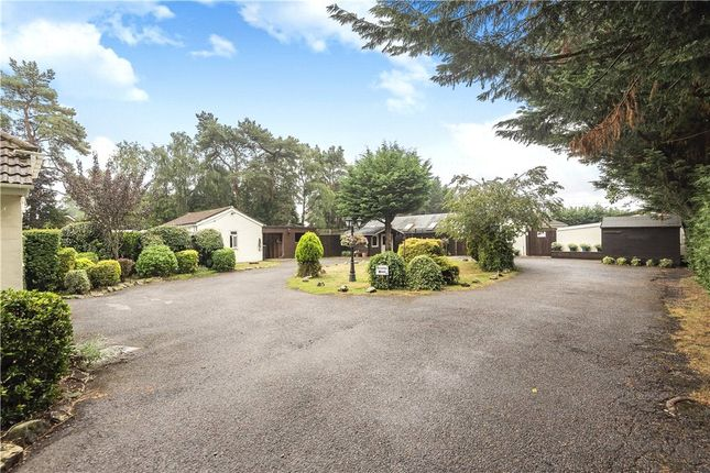 Thumbnail Leisure/hospitality for sale in Wayside Road, St. Leonards, Ringwood