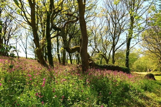 Meadow of Vicarage Hill, Tintagel, Cornwall PL34